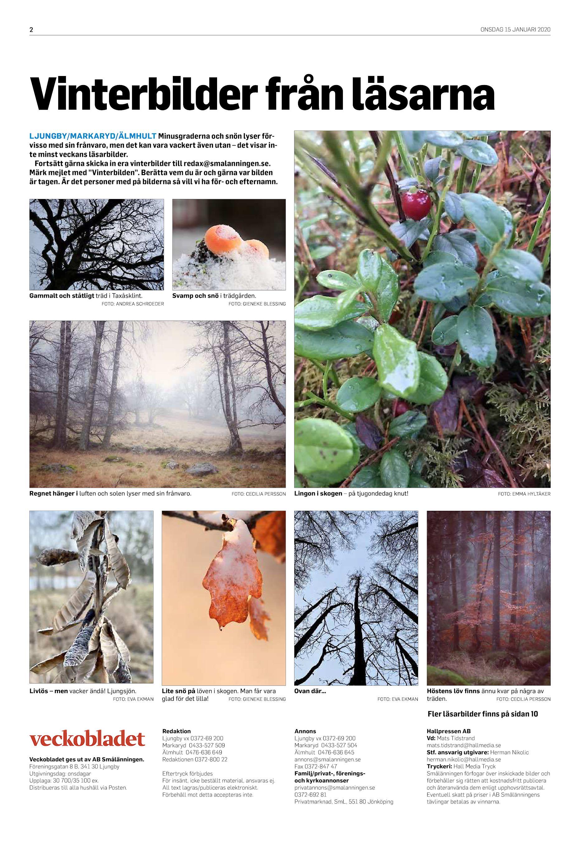 sälja enstaka träd på rot